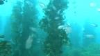 Video «Radioaktivität im Meer» abspielen