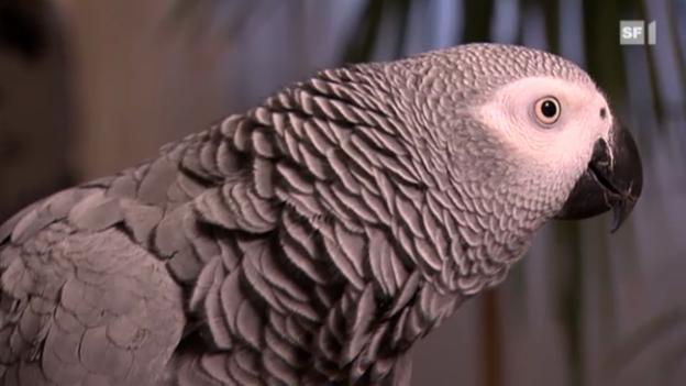Video ««Einstein» vom 22. Dezember 2011» abspielen