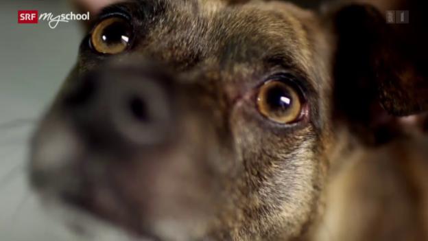 Video «Wie Tiere denken: Wahrnehmung (1/3)» abspielen