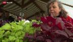 Video «Seltenes Gemüse» abspielen