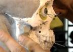 Video «Gesichtsrekonstruktion - Präzisionsarbeit bis zum Kinngrübchen» abspielen