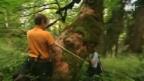 Video «Die Urwälder der Schweiz» abspielen