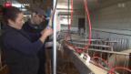 Video «Initiative soll Bauern stärken» abspielen