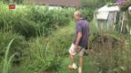 Video «Grüne Felder trotz Dürre» abspielen