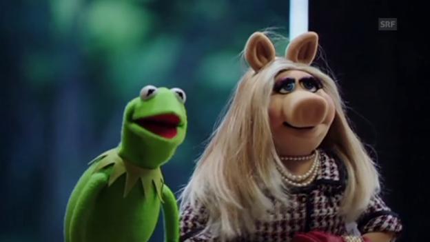 Video «Kermit und Piggy trennen sich (Tagesschau, 5.8.2015)» abspielen