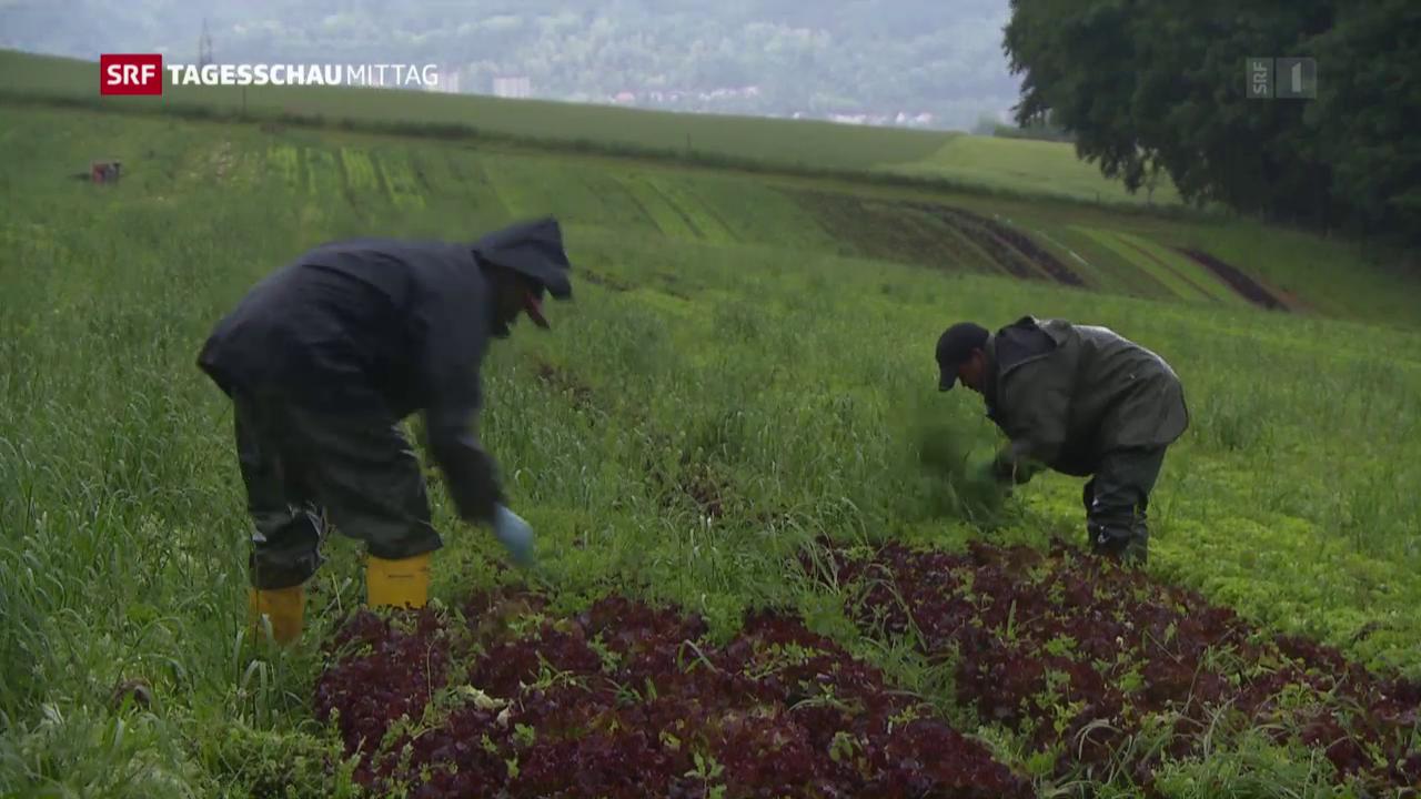Flüchtlinge bewähren sich auf Bauernhöfen