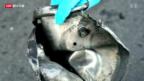 Video «Boston: Terrorverdächtiger entdeckt» abspielen