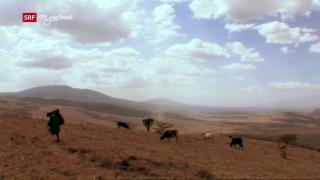 Video «Serengeti – Kein Platz für Menschen?» abspielen