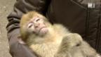 Video «Einstein auf dem Affenberg» abspielen