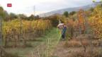 Video «Mit traditionellen Traubensorten tüfteln» abspielen