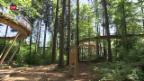 Video «Baumwipfelpfad soll Aufschwung bringen» abspielen