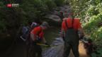 Video «Fische aus trockenem Bach gerettet» abspielen