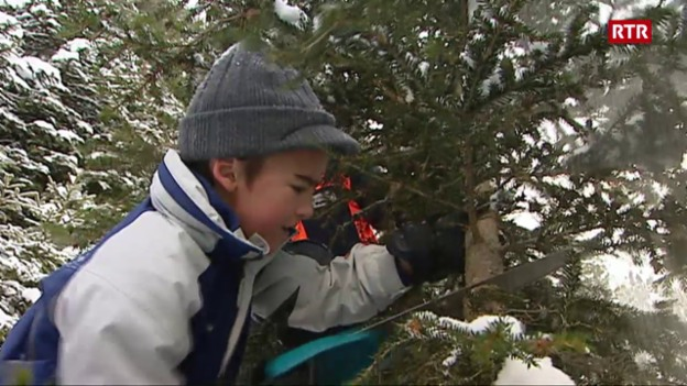 Laschar ir video «A la tschertga da pignols da Nadal en Val Medel (Minisguard dals 18-12-2010)»