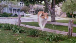 Video «Lassie wird 80» abspielen