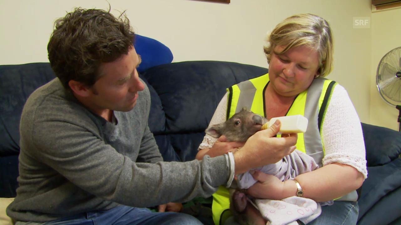 Traceys tapsige Pflegekinder