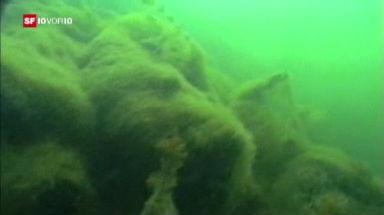 Energie-Serie: Treibstoff aus Algen