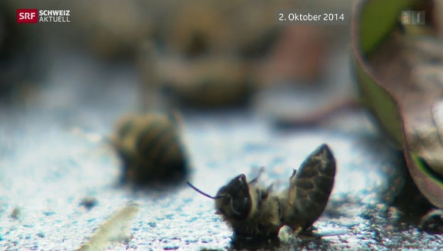 Video «Bienensterben und ein Verdacht» abspielen
