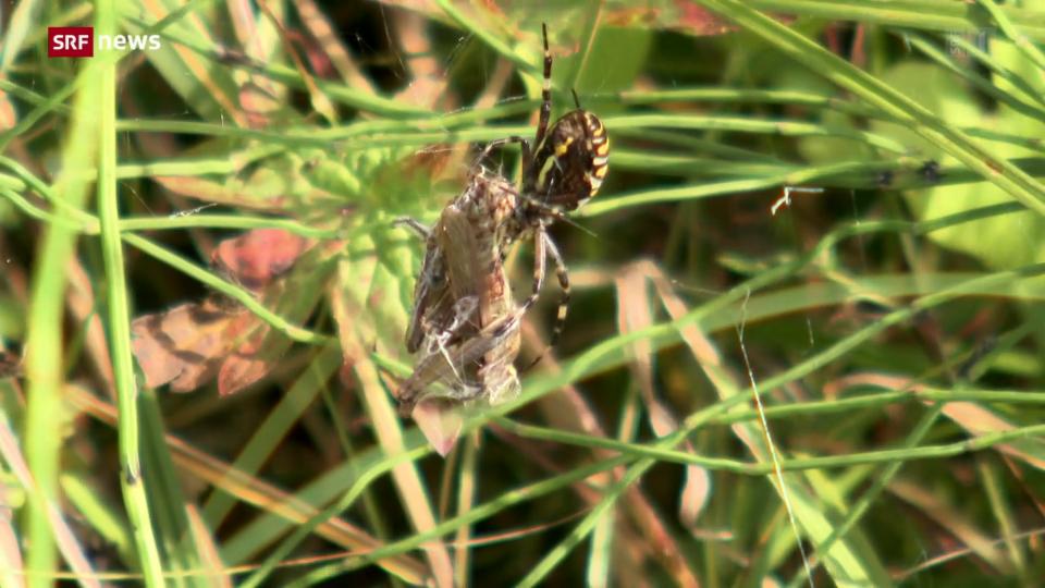 Fast die Hälfte aller Insekten-Arten sind bedroht