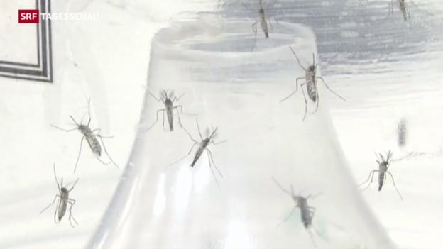 Video «Zika-Virus: Alarmierendes Ausmass laut WHO» abspielen