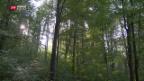 Video «Weniger Bäume fällen, um das Klima zu schützen» abspielen