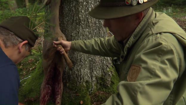 Video «Krach im Wald: Förster gegen Jäger» abspielen