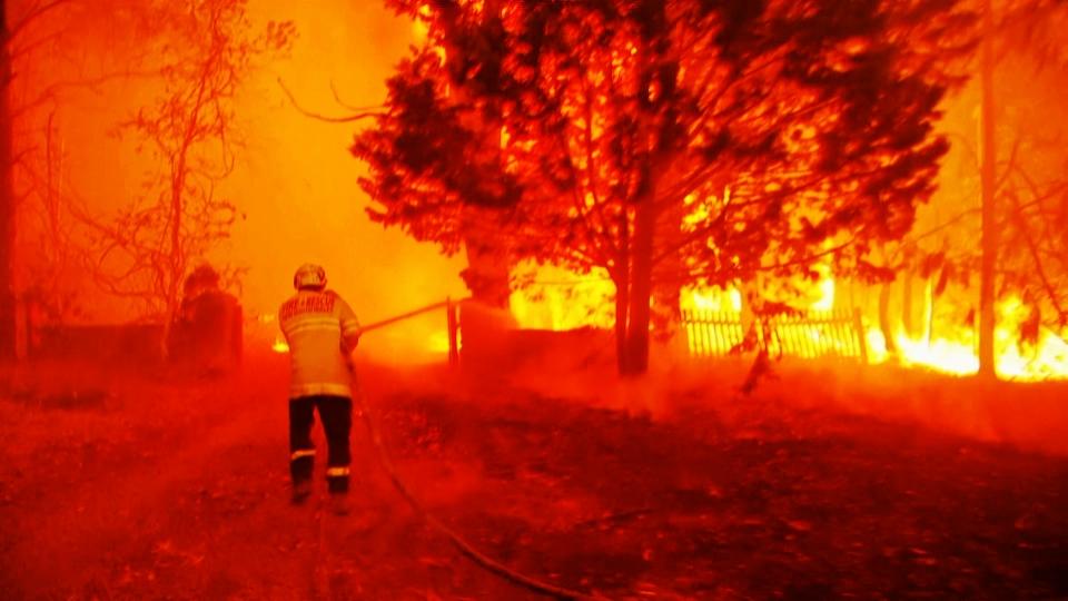 Die verheerenden Folgen der Waldbrände