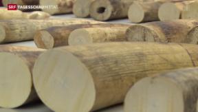 Video «Elfenbeinfund in Zürich » abspielen