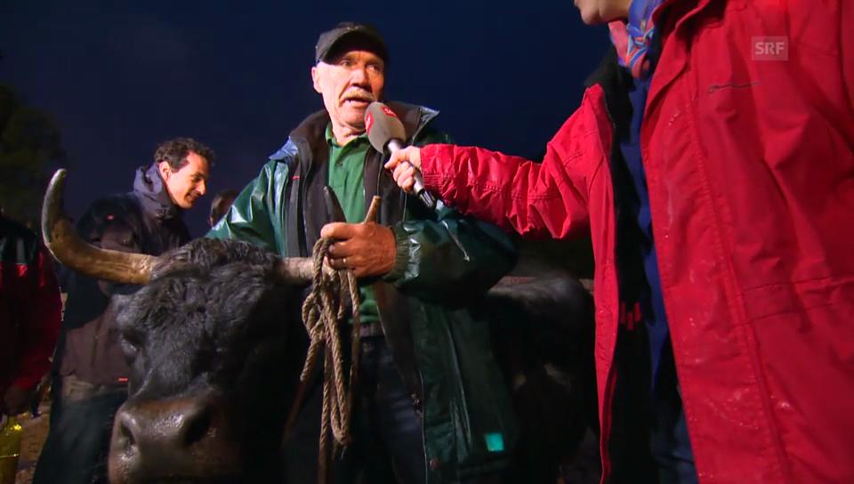 Bernard Constantin, siegreicher Züchter