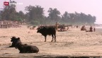 Video «Auslandreisen: Ein Gefahrenherd für Keime» abspielen