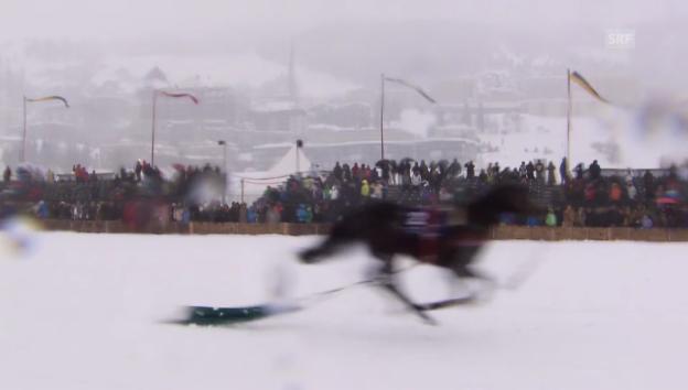 Video «Brigitte Oertli verliert Pferd beim Skijoering» abspielen