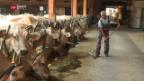 Video «Notstand auf Kuhweiden» abspielen