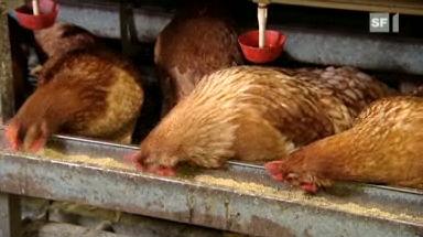 Bio-Schwindel: Ökologisch unsinnige Importe