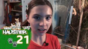 Video «Hanna und ihre Zwergmäuse» abspielen