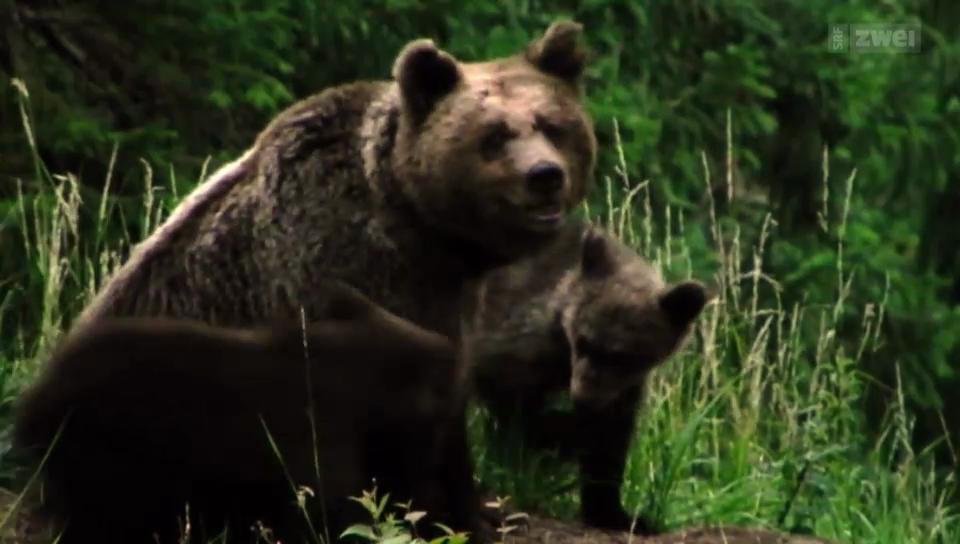 David Bittner und die Rückkehr der Bären