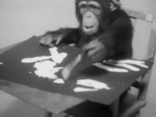 Video «Affenbilder versteigert» abspielen