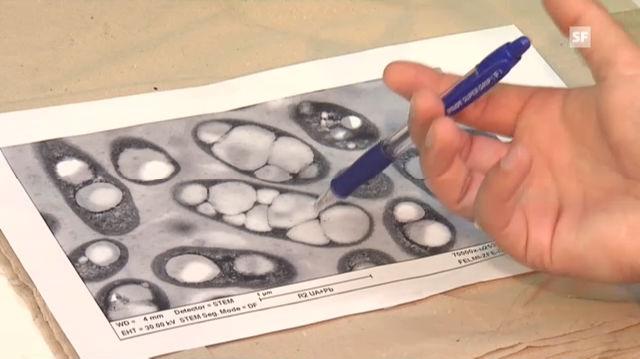 Bakterien produzieren Kunststoff: Biotechnologe Martin Koller erklärt, wie.