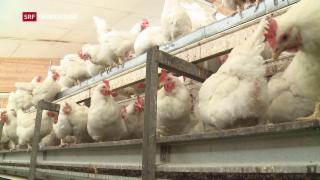 Video «Giftige Eier nun auch in der Schweiz» abspielen
