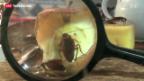 Video «Insekten-Restaurant in London» abspielen
