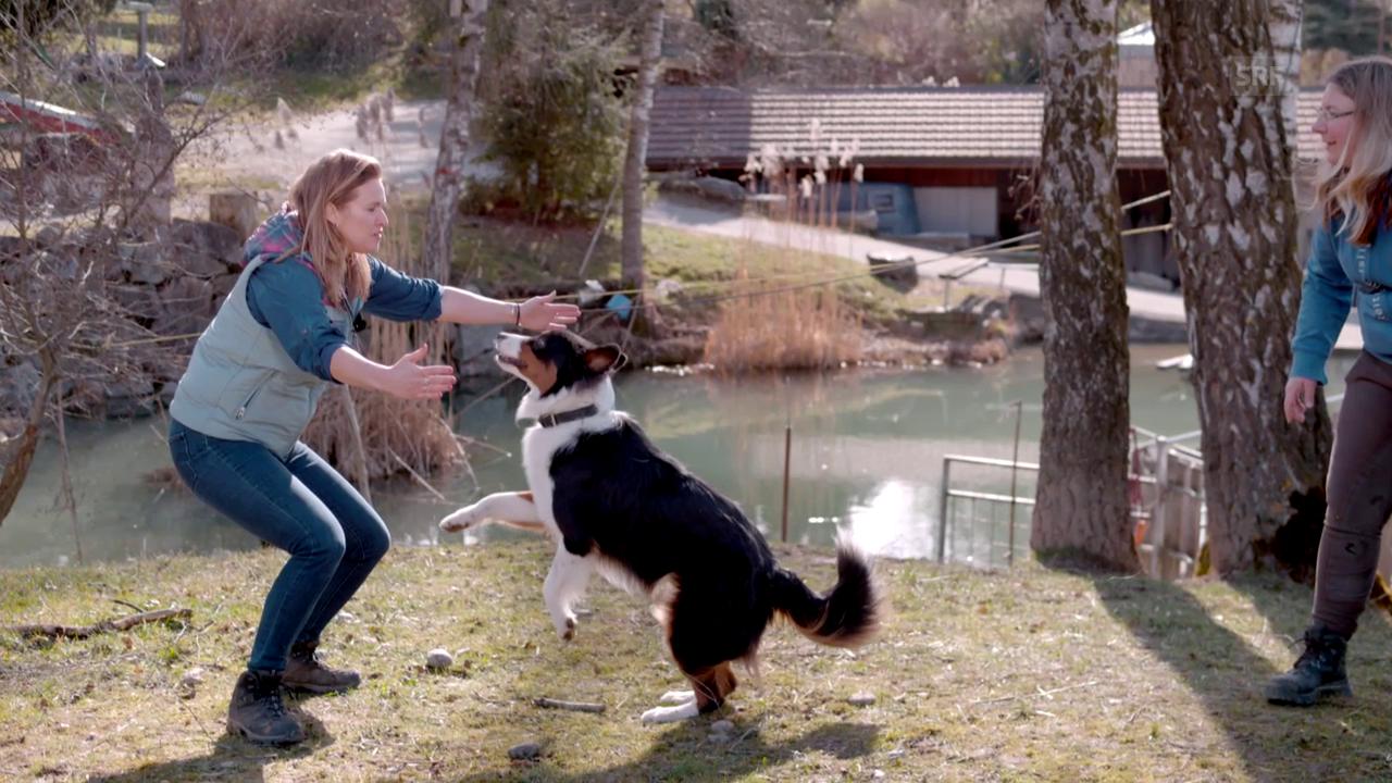 Ein Hundesprung in Superslow