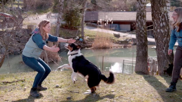 Video «Ein Hundesprung in Superslow» abspielen
