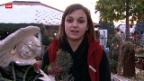 Video «Berufsbild: Floristin EFZ» abspielen