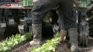 Video « Bund überweist Millionen für Arbeitslose im Ausland» abspielen