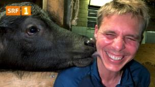 Video «Jöö-Alarm: Reto Scherrer und die Baby-Wasserbüffel» abspielen