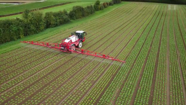 Video «Pestizide in Lebensmitteln» abspielen