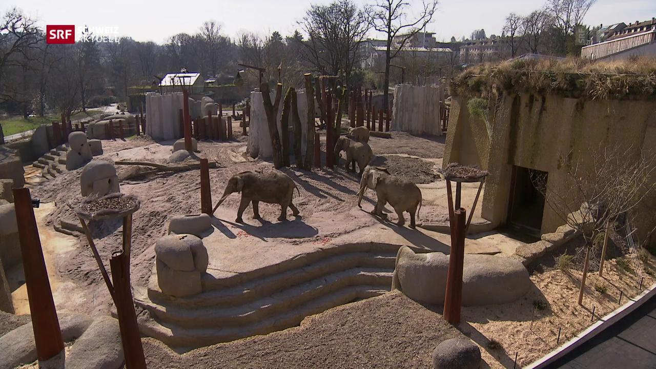 Mehr Platz für die Basler Elefanten