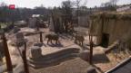 Video «Mehr Platz für die Basler Elefanten» abspielen